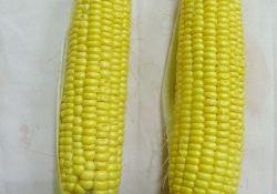戴景瑞院士:八成国人吃过转基因食品,你可能已经吃了20年!