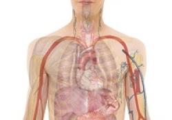 "Lancet:<font color=""red"">MobiusHD</font>装置通过放大颈内动脉压力感受治疗顽固性高血压的原理验证临床研究"