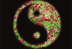 Free Radic Biol Med:小心!DTC和绿茶提取物具有协同毒性!