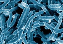 Materials:新型碳纳米管对对枯草芽孢杆菌生物膜的抑制作用