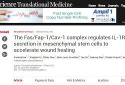 Sci Transl Med:中美科学家找到加速皮肤伤口愈合新方法