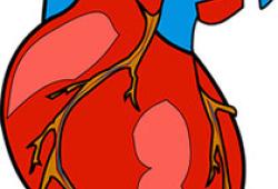 Circulatopn:氯沙坦对法洛四联症修复术后的右心室功能障碍无治疗效果