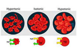 "Blood:在慢性淋巴细胞白血病中,Wnt5a诱导ROR<font color=""red"">1</font>招募DOCK<font color=""red"">2</font>激活Rac<font color=""red"">1</font>/<font color=""red"">2</font>,从而增强CLL细胞增殖"