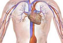Circulation:对于心力衰竭患者,合并肺动脉高压可促进其整体肺血管重构