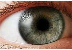 Photodiagnosis Photodyn Ther:N-乙酰半胱氨酸防止由光动力治疗引起的脉络膜视网膜损伤