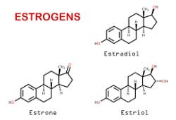 长期的雌激素疗法导致肠道微生物活性的改变