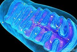 DDS: 血浆线粒体DNA分析有助于预测急性胰腺炎患者的胰腺坏死的发生风险