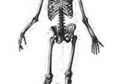 Plos Biology:骨质疏松症治疗新靶标