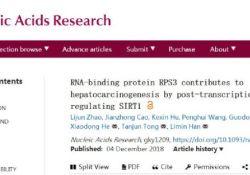"Nucleic Acids Res:RNA结合蛋白RPS3影响<font color=""red"">HCC</font>进展"