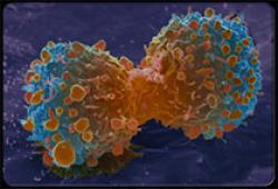 外泌体研究、转化和临床应用专家共识