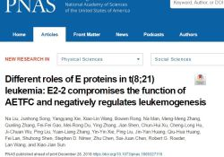 """PNAS:研究发现E<font color=""""red"""">蛋白</font>家族成员E2-2通过影响AETFC<font color=""""red"""">复合</font><font color=""""red"""">体</font>负性调控白血病发生"""