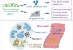 Life Sci:喜讯|浙大转化医学院闵军霞团队在天然产物抗胃癌研究领域获得重要进展