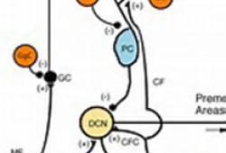 Neuron:科学家发现吗啡成瘾治疗新通路