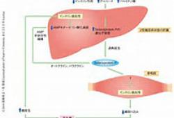 DIABETOLOGIA:慢性肾病和糖尿病的关联和危险因素-全国范围的人群队列研究
