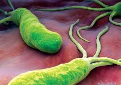 J Gastroenterology:质子泵抑制剂使用对艰难梭菌感染风险的影响