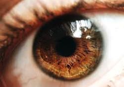 "Biomater Sci:眼睑体内重建的仿生<font color=""red"">眼</font><font color=""red"">肌</font> - 结膜双相支架"