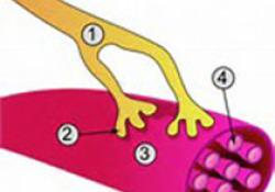 "Lancet:神经移植手术用于改善颈脊髓<font color=""red"">损伤</font>患者上肢功能"