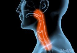 "Respirology: <font color=""red"">BMI</font>导致患者支气管收缩期间闭合气道"