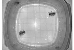 "AJR:美妆神器磁性睫毛竟是造成MRI""伪影""的新来源"