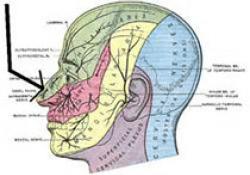 "Laryngoscope:肝素治疗作为辅助治疗对永久先天性突发感觉<font color=""red"">神经</font><font color=""red"">性</font>耳聋治疗效果研究"