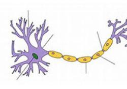 世界最大全脑神经元三维数据库建成