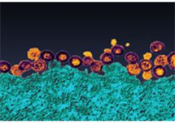 Sci Adv | 合作团队发现戒断期甲基苯丙胺成瘾者时间知觉的动态变化 