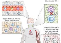 Nat Immunol:肿瘤免疫治疗抵抗的机制综述