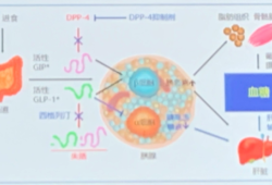 DPP-4抑制剂临床应用专家指导建议解读 | CDS2019