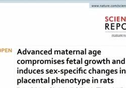 Sci Rep:生男生女大不同,高龄孕妇男性后代心血管疾病风险明显增高!