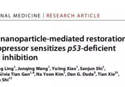 """Sci Trans Med:纳米技术助力恢复p53<font color=""""red"""">抑</font><font color=""""red"""">癌基因</font>活性,成功延缓癌症发展!"""