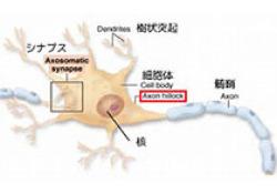 """<font color=""""red"""">Lancet</font> <font color=""""red"""">Neurol</font>:闭环诱发复合动作电位刺激用于改善慢性背腿疼痛"""