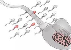 """Nat Med:评估后代患<font color=""""red"""">自闭</font><font color=""""red"""">症</font>的风险,可以通过检测精子的突变实现"""