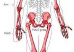 "Radiology:除了<font color=""red"">髂</font>前下棘形态,利用MRI该如何评估股骨髋臼撞击综合征呢?"