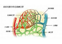 "Blood:胞外<font color=""red"">RNA</font>释放介导侧枝动脉形成"
