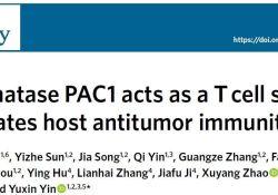 "Nat Immunol:<font color=""red"">北京</font><font color=""red"">大</font><font color=""red"">学</font>尹玉新团队揭示<font color=""red"">肿瘤</font>免疫逃逸新机制"