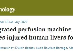 "Nat Biotech:重大突破!新技术可让肝脏实现体外""7天超长待机""!"