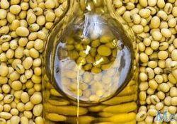 美国消耗最广泛的油脂导致大脑遗传改变:大豆油与小鼠的代谢和神经系统改变有关