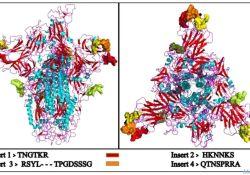 "印度学者称新冠<font color=""red"">病毒</font>特有基因插入片段跟HIV很像,不太像自然进化而来,惨遭刘<font color=""red"">如</font>谦打脸"