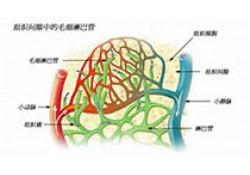 """Blood:细菌感染时,<font color=""""red"""">1</font>型干扰素通过HMGB<font color=""""red"""">1</font>介导DIC的发生"""
