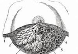 Seattle Genetics公司的口服HER2抑制剂图卡替尼治疗乳腺癌,获得FDA的优先审查