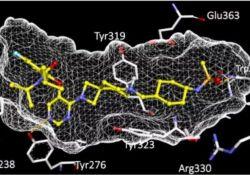 """Science:白血病能在发病前被""""拦截""""?小鼠模型证实可行"""