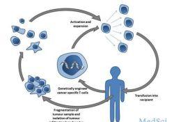 """细胞疗法MGTA-456治疗遗传性<font color=""""red"""">代谢</font><font color=""""red"""">疾病</font>的最新II期数据"""
