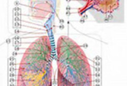 Chest:空气污染与特发性肺纤维化患者住院之间的关联