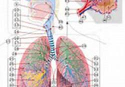 """Chest:空气污染与特<font color=""""red"""">发性</font>肺纤维化患者住院之间的关联"""