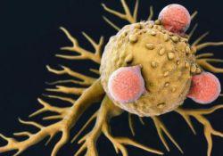 "Nature:新型<font color=""red"">免疫</font><font color=""red"">细胞</font>""动员""T<font color=""red"">细胞</font>,更有效抗击""癌症之王""胰腺癌"