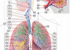 "Heart:<font color=""red"">间质</font><font color=""red"">性</font>肺疾病是缺血性心脏病和心肌梗塞的危险因素"